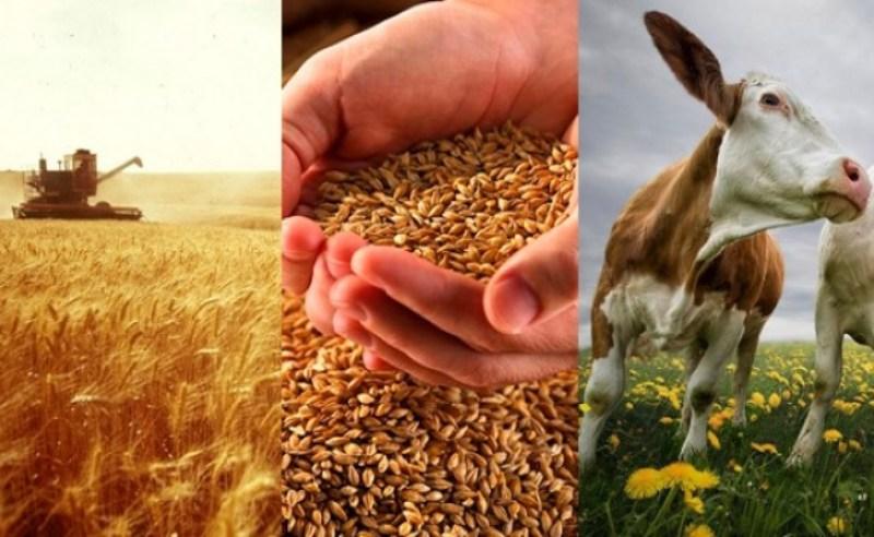 Розвиток фермерства позитивно вплине на розвиток сільських територій