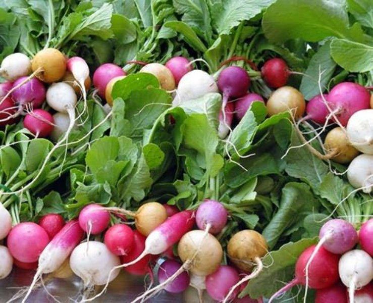 Как вырастить хороший урожай редиски?