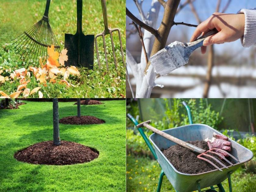 Садово-огородные работы в декабре