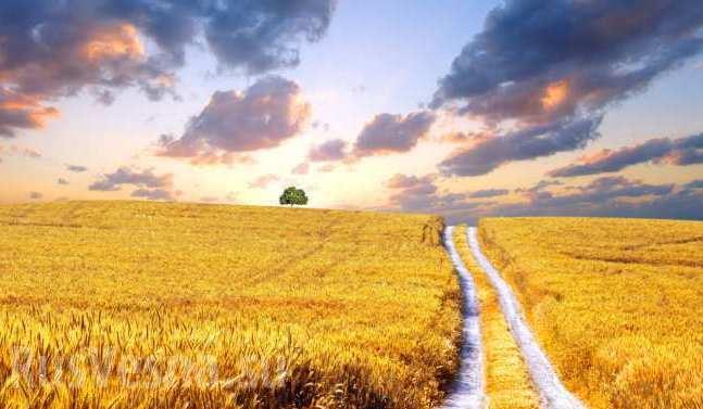 Всеукраїнська Аграрна Рада підтримала легалізацію торгівлі землею