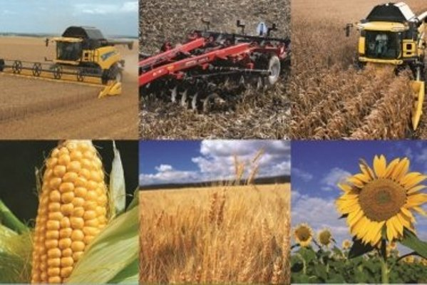 В агросекторе Украины видны первые результаты реформ — мнение эксперта
