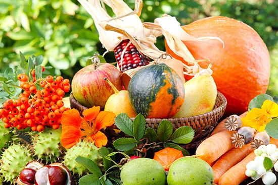 Работы в саду и на огороде на сентябрь