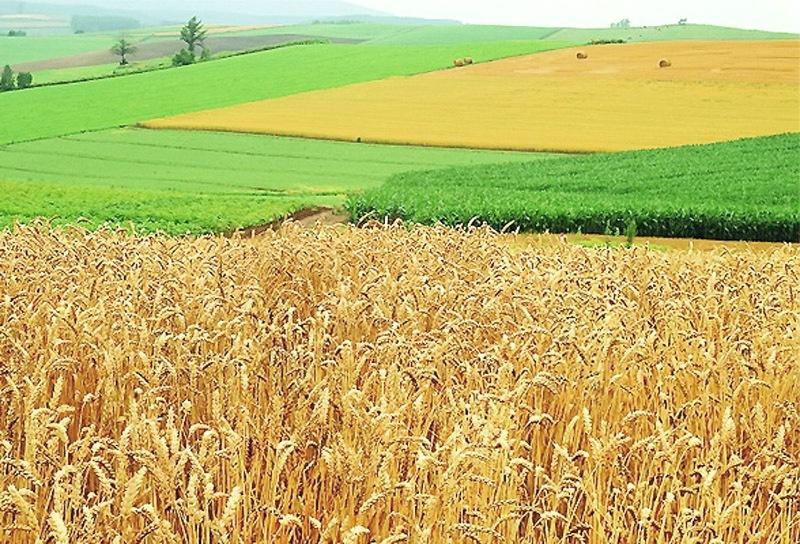 Кабмін передав землі постійного користування у власність фермерів