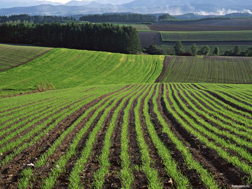 Держгеокадастр посилив контроль за дотриманням земельного законодавства