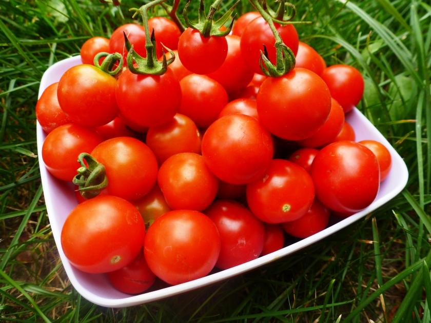 Как ускорить рост помидор?