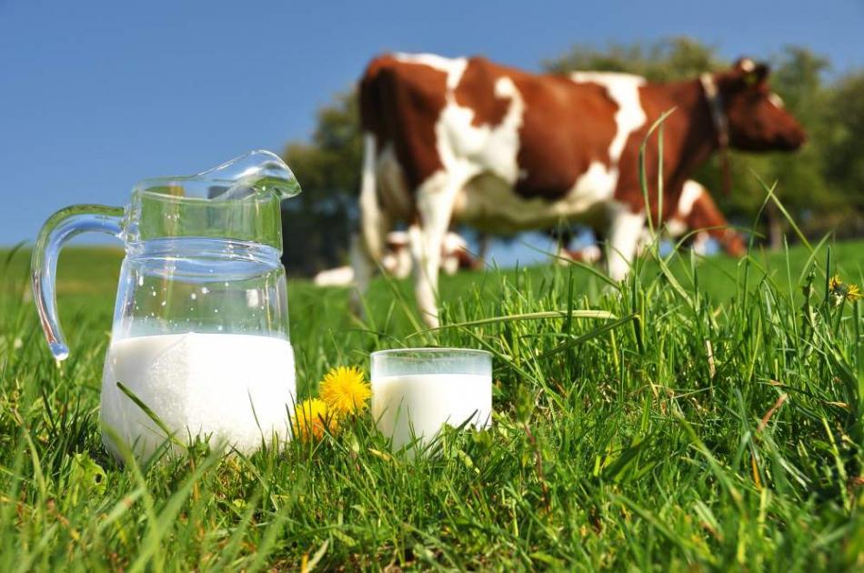 Для підвищення якості молока буде надаватися значна державна підтримка