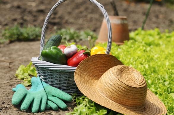 Работы в огороде в июле