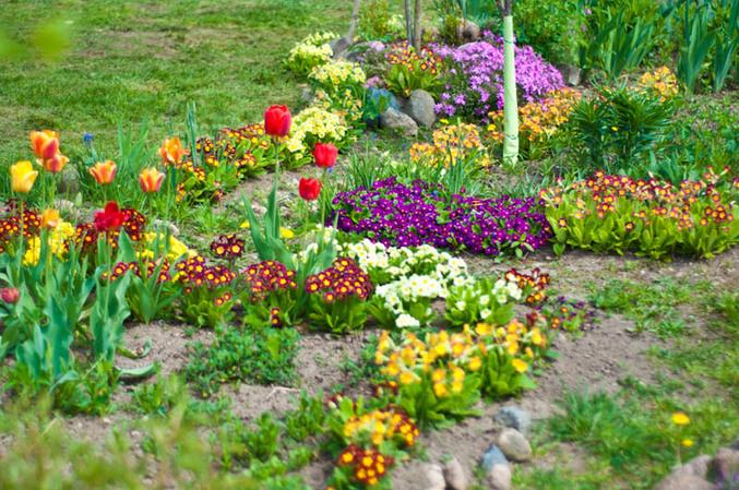 Весенние цветы на даче