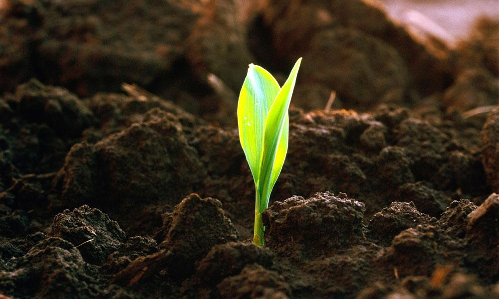 Органическое земледелие – особенности и основные правила
