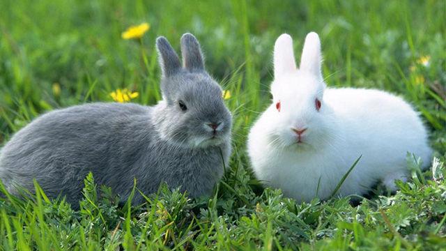 «Кролики — это не только ценный мех…»