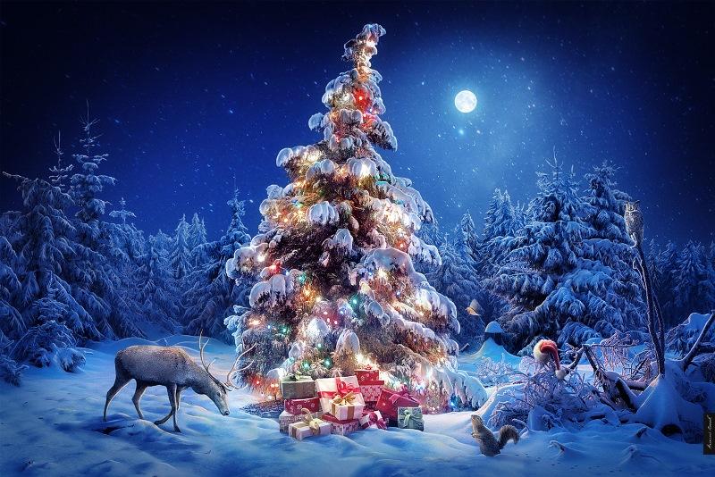 Выставка « Рождественская  звезда»