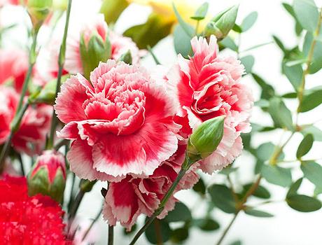 Какие цветочные культуры сажать в феврале?
