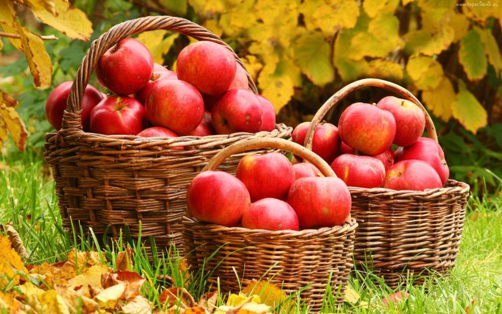 Как хранить яблоки зимой: несколько секретов и советов