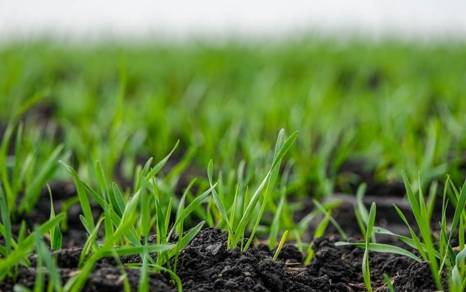 Уряд вдосконалив механізм збереження та відтворення родючості ґрунтів