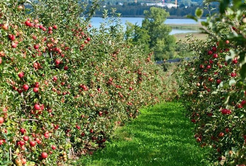 Какие деревья и кустарники совместимы в саду?