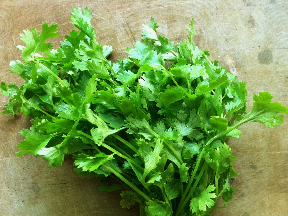 фото салаты выращивание gif